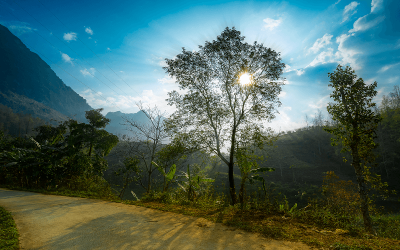 NFS Vietnam Update – The Field